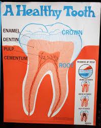 zdravi-zub